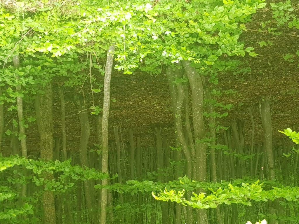 article souffle et thérapie arbre c'est l'été