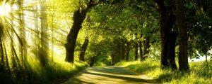 Paysage de bois, souffle et respiration par la nature