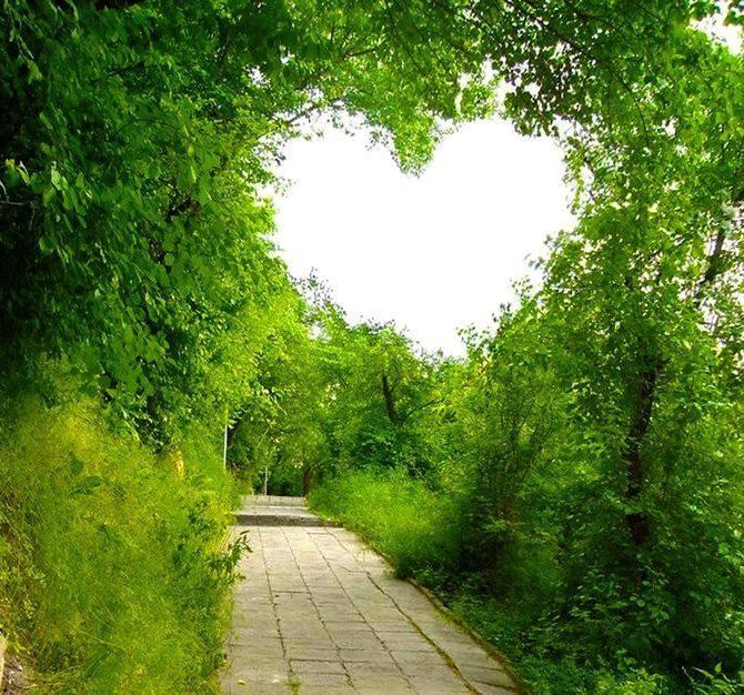 coeur a travers les branches d'arbre